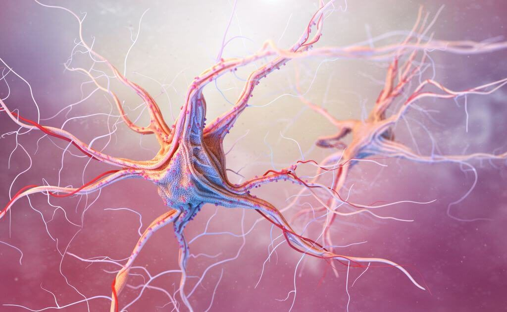 The nervous system in the human body